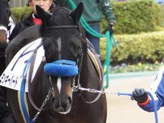 20180128 東京4R 3歳未勝利 ミッキーバード 04