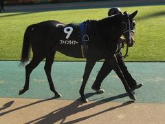 20141122 東京9R からまつ賞 ファインライナー 07