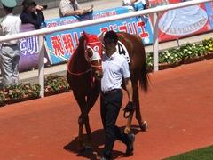 20160618 阪神8R 3歳上牝馬500万下 レーヌドブリエ 09