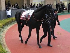 20141206 中京11R 金鯱賞(G2) サトノノブレス 08