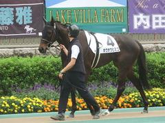 20190608 東京6R 3歳牝馬未勝利 ホウオウヒミコ 03