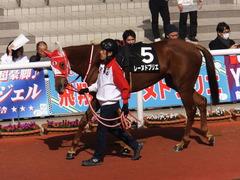 20170225 阪神9R 丹波特別(500) レーヌドブリエ 07