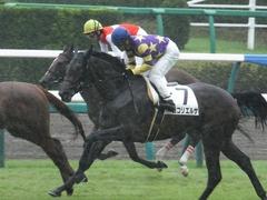 20170917 中山5R 2歳牝馬メイクデビュー ショウナンアーデン 15