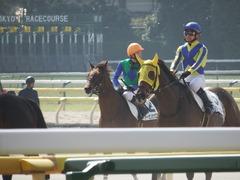 20180217 東京4R 4歳上障害未勝利 トーセンカナロア 18