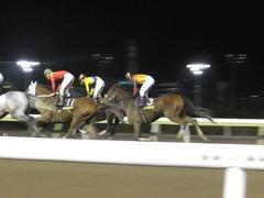 20171129 大井11R 勝島王冠(S3) ユーロビート 10