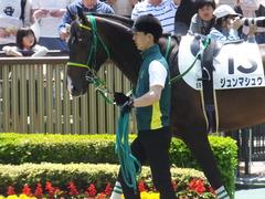 20170430 東京5R 3歳未勝利 ジュンマシュウ 02