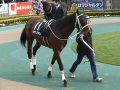 20150222 東京11R 金蹄S ショウナンアポロン 03