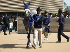 20180304 中山5R 3歳牝馬未勝利 プラチナベール 16