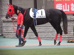 20181008 東京12R (500) ノーザンクリス 05
