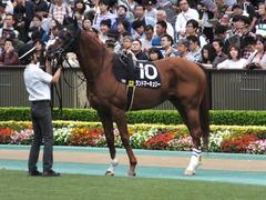20161009 東京10R テレビ静岡賞(1600) ランドマーキュリー 10