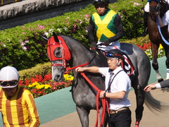 20170430 東京11R スイートピーS 3歳牝馬OP ミザイ 12