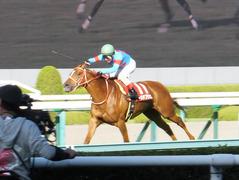 new_20150920 阪神11R ローズS(G2) レーヌドブリエ 20