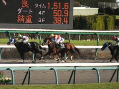 20141213 中山10R 北総S ショウナンアポロン 16