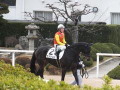 20170114 京都8R 4歳上牝馬500万下 サラマンカ 13