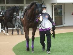 20190323 中山9R ミモザ賞 3歳牝馬(500) トロハ 02
