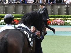 20161023 東京9R くるみ賞 2歳500万下 コウソクストレート 18