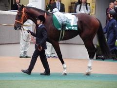 20171118 東京11R 東スポ杯2歳S(G3) ルーカス 03