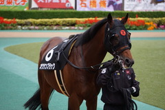 20191124 東京10R ウェルカムS (3勝) オウケンブラック 10