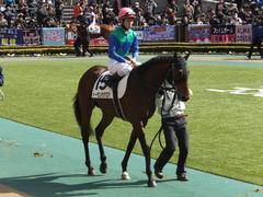 20150221 東京5R 3歳未勝利 トーセンカナロア 11
