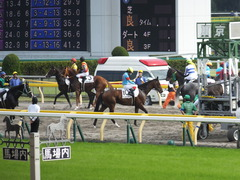 20141011 東京8R ヴィルトグラーフ 06