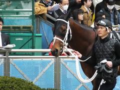 20150321 中山10R 韓国馬事会杯 ショウナンアポロン  07