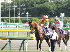 20150607 東京11R 安田記念(G1) モーリス 15