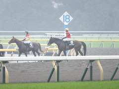 20141012 東京10R レジェンドTC オウケンブラック 13