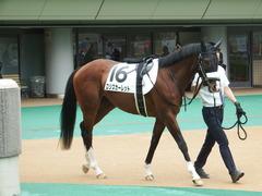 20180616 東京6R 3歳未勝利 ロジスカーレット 02