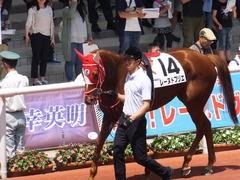 20160618 阪神8R 3歳上牝馬500万下 レーヌドブリエ 13