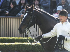 20170128 東京4R 3歳未勝利 バトルオスカー 14