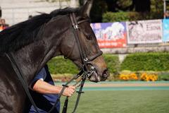 20191110 東京2R 2歳牝馬未勝利 ミヤコシャンティ 15