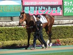 20190126 東京5R 3歳未勝利 ピンシェル 05