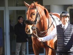 20181228 中山2R 2歳牝馬未勝利 パーフェクトワン 03
