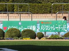 20140316 中山6R ショウナンラグーン 01