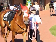 20161016 新潟10R 粟島特別(牝500) レーヌドブリエ 10