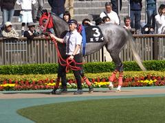 20170430 東京11R スイートピーS 3歳牝馬OP ミザイ 02