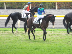 20141130 東京3R 2歳未勝利 トーセンカナロア 12