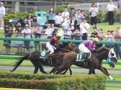 20150627 東京8R 東京JS(JG3) メジロサンノウ 13