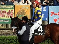20181125 東京8R オリエンタル賞(1000) ロジスカーレット 18