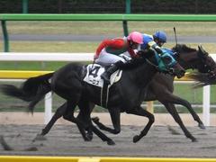 20151123 東京1R 2歳未勝利 アイルーロス 10