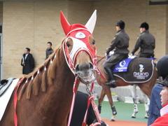 20141207 中京4R 2歳未勝利 レーヌドブリエ 16