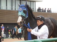 20190323 中山7R (500) アドマイヤムテキ 20