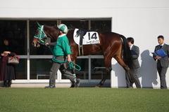20191214 中山6R 2歳メイクデビュー トーセンマックス 07
