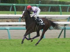 20190323 中山9R ミモザ賞 3歳牝馬(500) トロハ 16