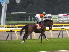 20141108 東京11R 京王杯2歳S マイネルグルマン 12