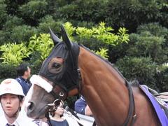 20140915 大井11R 東京記念 ユーロビート 08