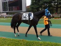 20151017 東京4R 2歳メイクデビュー モーゼス 05