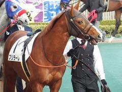 20180128 東京12R (1000) ブリラーレ 04