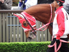 20171118 東京10R ユートピアS(牝1600) レーヌドブリエ 06