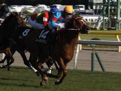 20161016 新潟10R 粟島特別(牝500) レーヌドブリエ 28
